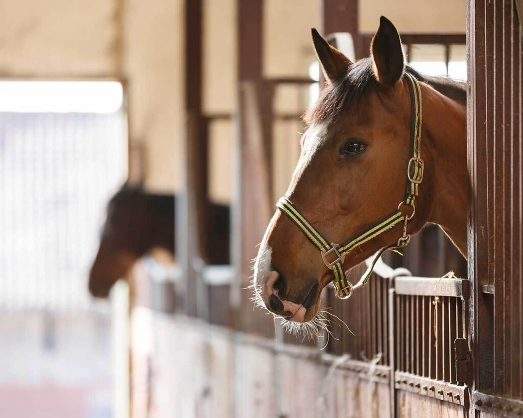 VIDEO: Stald Wallflower Equestrian