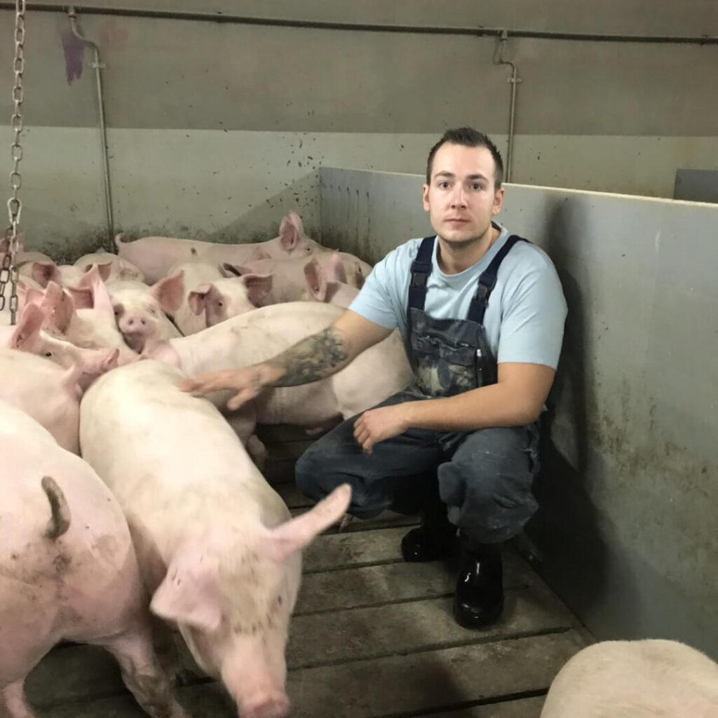 bedre trivsel og sundhed i svinebesætningen